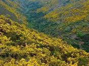 campos amarillos, alfombra anunciando primavera