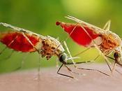 Mitos verdades sobre mosquitos picaduras