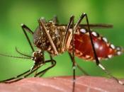 verano picaduras mosquitos