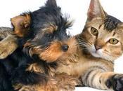 ¿Por Gato dócil como Perro?