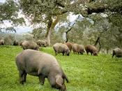 beneficios cerdo ibérico para nuestra salud