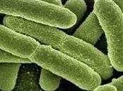 bacterias extrañas conocidas