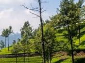 Munnar campos Kerala