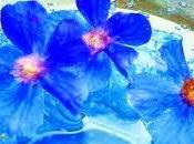 Terapia flores Bach, como toman
