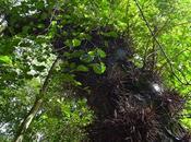 Reserva Natural Formosa sorprende belleza contrastes naturales