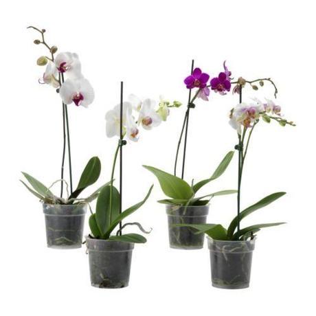 Las plantas para el ba o seg n el feng shui paperblog for Jardines pequenos segun el feng shui