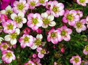 jardín huerto abril