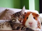 Extrañas parejas animales duermen juntos.