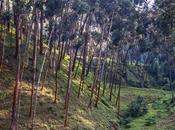Lago Kivu Parque Nacional Nyungwe