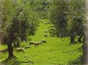 Crece olivar ecológico Jaén.