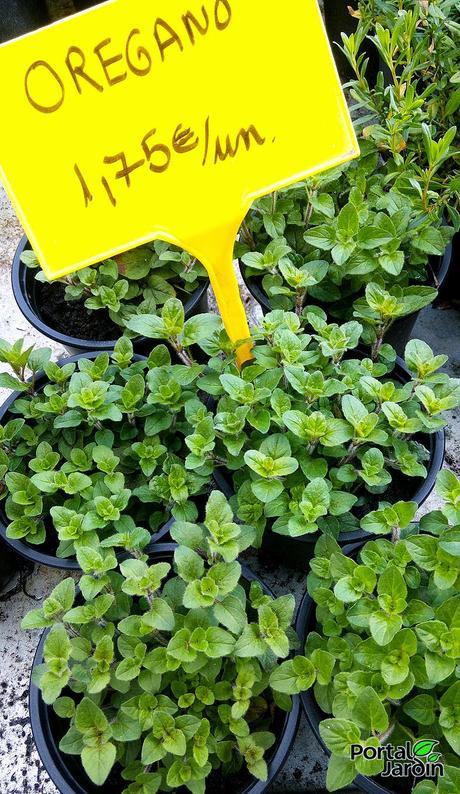 Plantas arom ticas paperblog - Plantas aromaticas mediterraneas ...