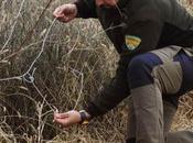 Agentes para Protección Naturaleza APNs detectan prácticas ilegales caza Grado (Huesca)