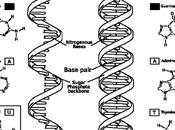Virus del papiloma humano (VPH) (1)