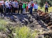 arqueólogos preparan para excavar oppidum ibero-romano Iliturgi, Mengíbar (Jaén)