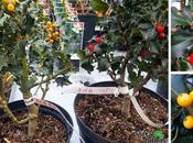 Arbustos, árboles frutales ornamentales.