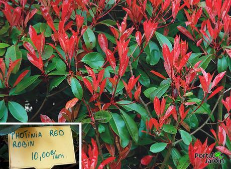 Arbustos Rboles Frutales Y Ornamentales Paperblog