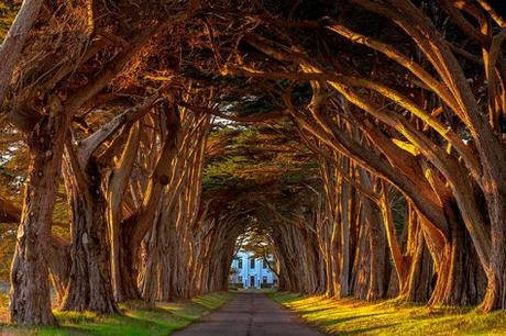 34-Cypress-Tree-Tunnel-At-The-Historic-Marconi-Wireless-Station-California_Michael-Brandt