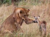 imagenes amistad entre animales