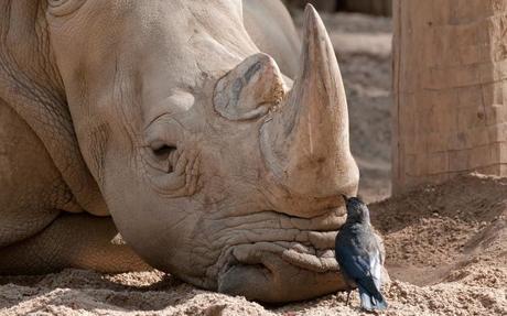 http://m1.paperblog.com/i/319/3199437/32-imagenes-amistad-animales-L-DHeav8.jpeg