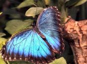 mariposa simboliza transformación