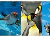 Delfines pingüinos Benalmádena