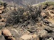 Excursión imprescindible Tenerife: Teide