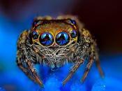 Hipnotizantes macro fotos arañas exóticas mirando directamente mente