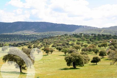 parque natural valle de alcudia y sierra madrona 1