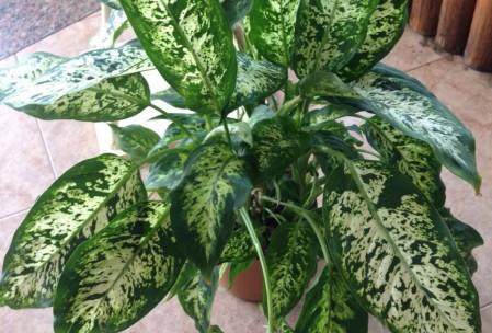Plantas venenosas paperblog - Plantas ornamentales venenosas ...