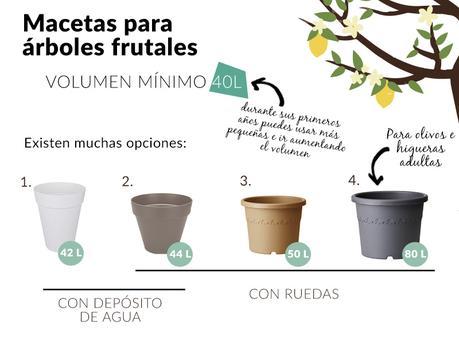 Cuidados de los rboles frutales en maceta paperblog for Arboles frutales pequenos para macetas