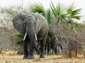 mejores safaris para 2015