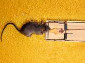 ¿Hay ratas ratones merodeando hogar? Aquí dejamos algunos remedios.