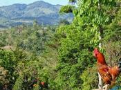 Fundadora, Primeras Haciendas Cafetaleras Nicaragua