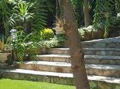 Disfrutando Jardín Enjoying Garden