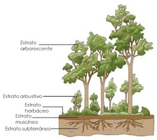 Estructura Y Dinámica De Los Ecosistemas Paperblog