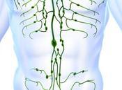 Qigong Yoga Efectos beneficiosos sobre sistema linfático