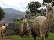 Saksaywaman Tambomachay: precioso caminando Valle Cusco.
