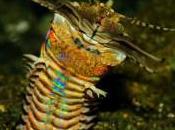 cazador furtivo oculto bajo lecho marino