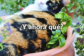 C mo evitar que los gatos arruinen tu huerto jard n for Como evitar los gatos en el jardin