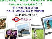Events causes love animals junio