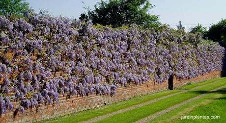 Plantas trepadoras en fachadas paperblog for Fachadas con plantas trepadoras
