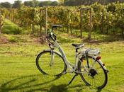 Salir ciudad perderse entre viñedos, plan primavera Ribera Duero