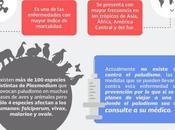 Paludismo#salud#enfermedad#infografía