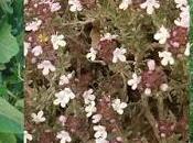 Solsticio verano: momento plantas medicinales.