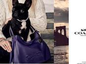 perro Lady Gaga, Miss Asia Kinney, llega nueva campaña Coach