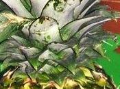 piña: adelgaza purifica