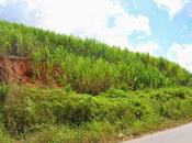 Playas Pernambuco: Praia Carneiros Porto Galinhas