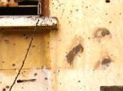 siete muertes gato Fénix
