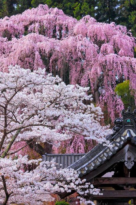 Jardines japoneses paperblog for Arboles japoneses para jardin