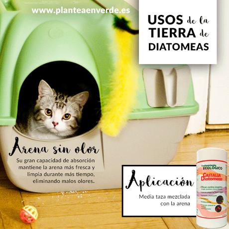 tierra de diatomeas para desparasitar gatos